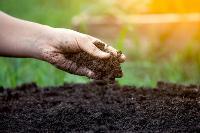 Đất tribat – Đất sạch giàu dinh dưỡng