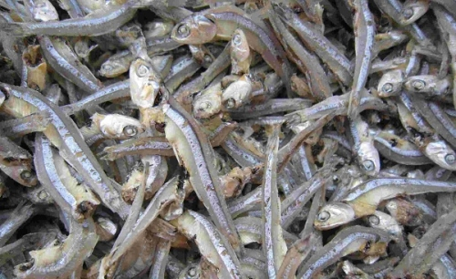 Cá cơm khô