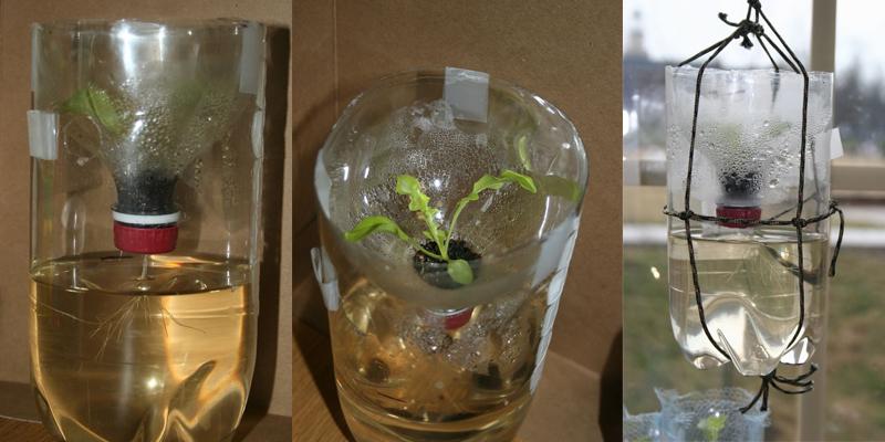 Cách trồng rau thủy canh độc đáo với vỏ chai nước tái chế