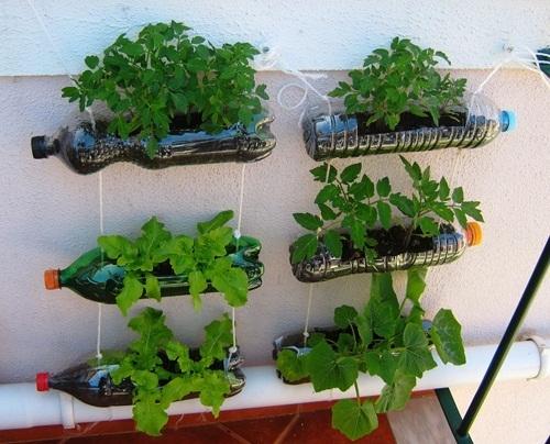 Cách trồng rau thủy canh với vỏ chai nước suối, nước ngọt