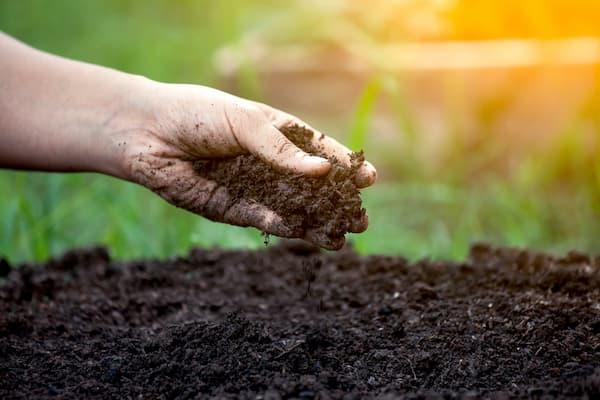 Đất tribat  Đất sạch giàu dinh dưỡng