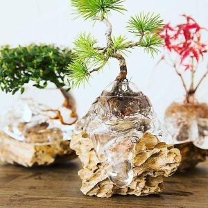 Phát sốt với chậu cây cảnh trồng không cần đất Aqua Bonsai