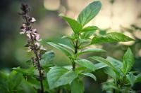 """Vườn rau xanh tại nhà nói """"không"""" với sâu bệnh"""