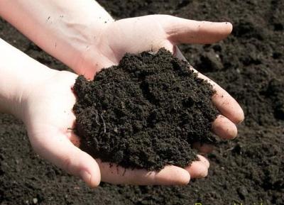Đất trồng rau nào tốt? Cách nhận biết hiệu quả